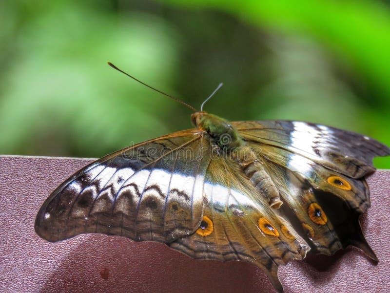 Πεταλούδα στο βιότοπό τους στοκ εικόνες