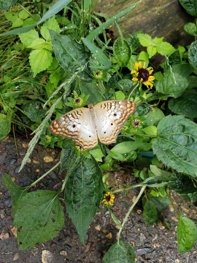 Πεταλούδα στο ζωολογικό κήπο στοκ εικόνα