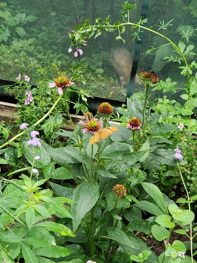 Πεταλούδα στο ζωολογικό κήπο στοκ φωτογραφία με δικαίωμα ελεύθερης χρήσης