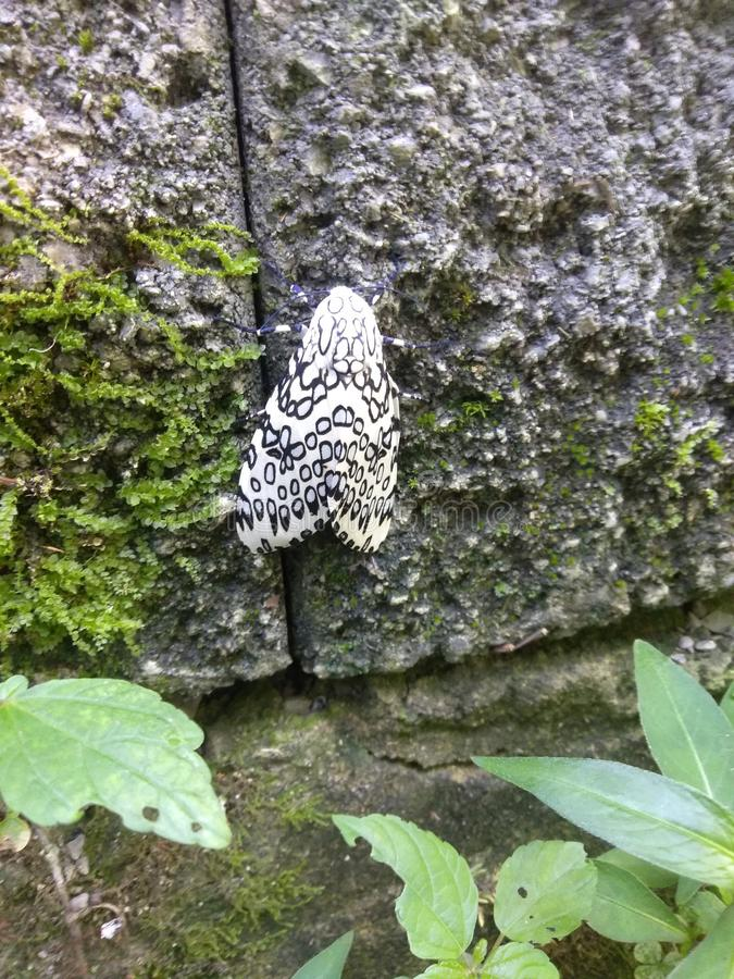 Πεταλούδα στο μπροστινό μέρος μου στοκ φωτογραφίες