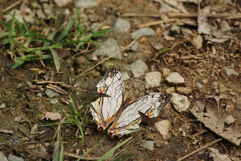 Πεταλούδα στο Χονγκ Κονγκ στοκ εικόνα