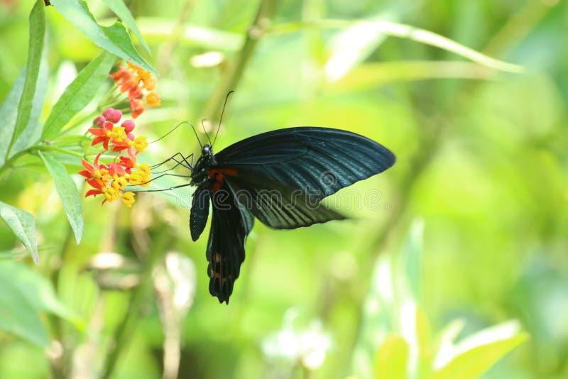 Πεταλούδα στο Χονγκ Κονγκ στοκ φωτογραφίες με δικαίωμα ελεύθερης χρήσης