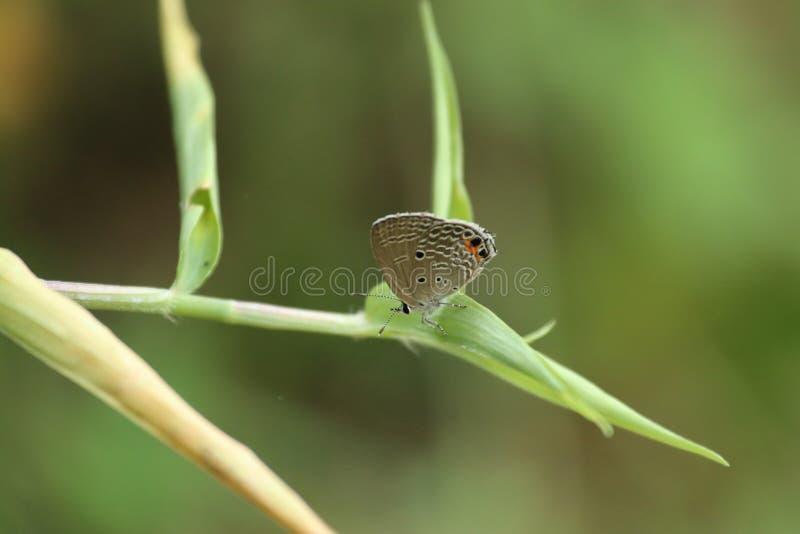 Πεταλούδα στο Χονγκ Κονγκ στοκ εικόνες