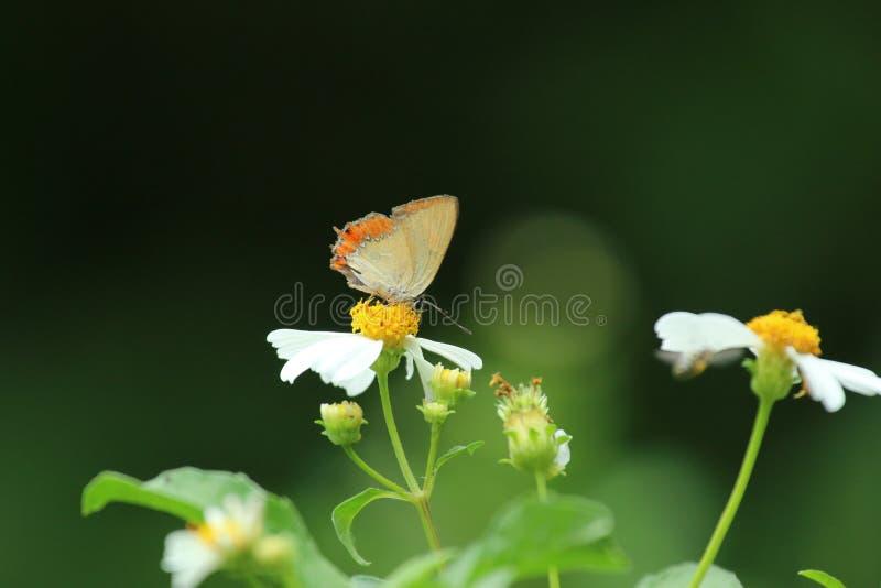 Πεταλούδα στο Χονγκ Κονγκ στοκ εικόνα με δικαίωμα ελεύθερης χρήσης