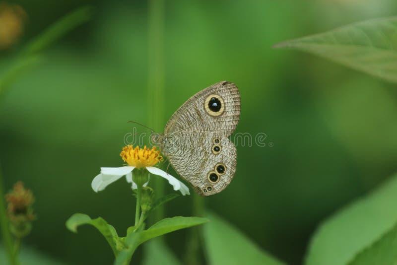 Πεταλούδα στο Χονγκ Κονγκ στοκ φωτογραφίες