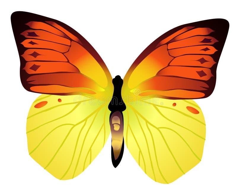Download πεταλούδα απεικόνιση αποθεμάτων. εικονογραφία από πυκνά - 13181446