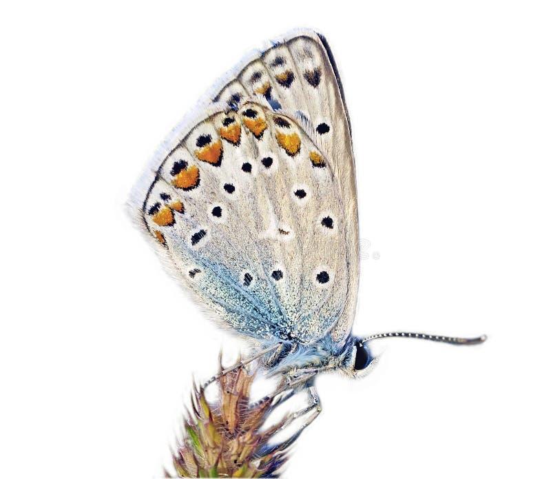 Download πεταλούδα στοκ εικόνα. εικόνα από πράσινος, φύλλο, χλόη - 13182327