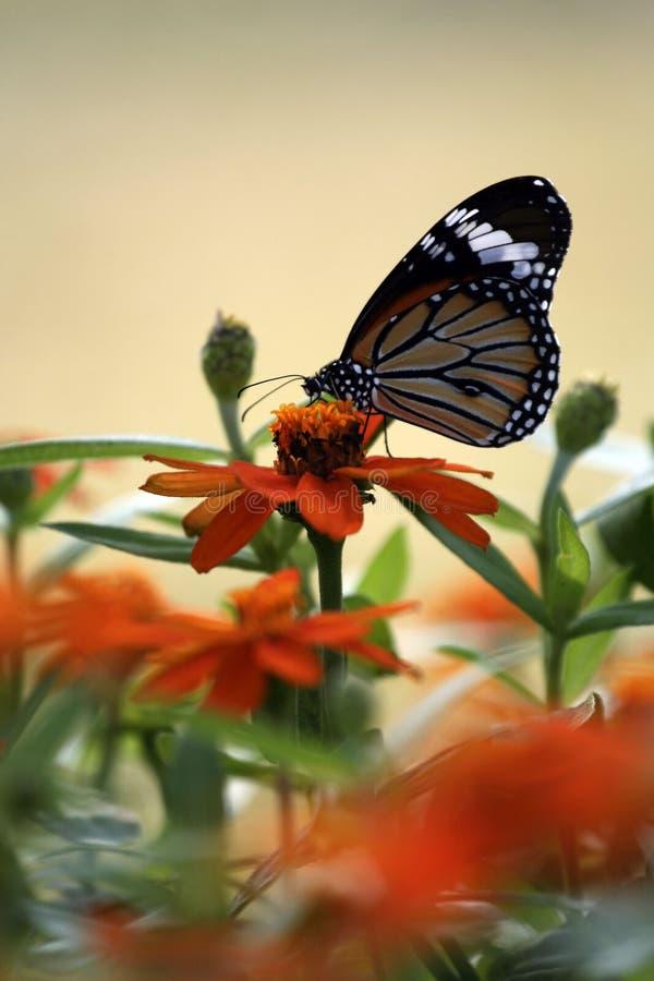 Download πεταλούδα στοκ εικόνες. εικόνα από πεταλούδα, φύση, και - 13185956