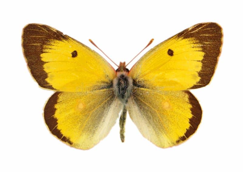 Download πεταλούδα στοκ εικόνες. εικόνα από φωτογραφία, σχέδιο - 13190312