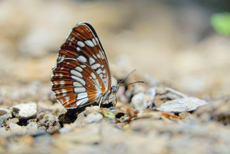 Πεταλούδα στοκ φωτογραφίες με δικαίωμα ελεύθερης χρήσης