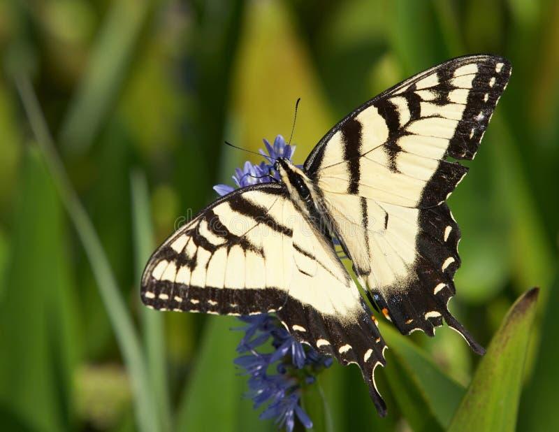 Download πεταλούδα στοκ εικόνα. εικόνα από ηρεμία, έντομο, γη, κίτρινος - 388687