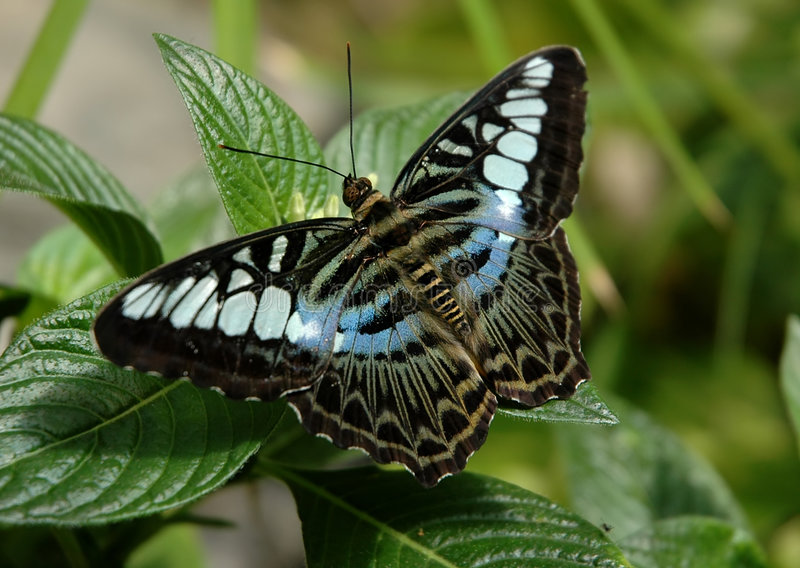Download πεταλούδα στοκ εικόνα. εικόνα από κήπος, έντομα, πρότυπα - 60245
