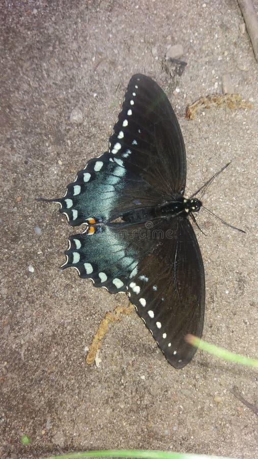Πεταλούδα Pritty στοκ φωτογραφία με δικαίωμα ελεύθερης χρήσης