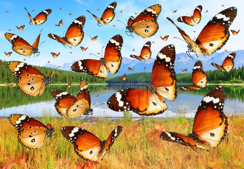 Πεταλούδες που πετούν πέρα από τα λιβάδια στοκ φωτογραφίες
