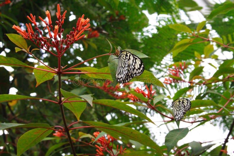 Πεταλούδες σε ένα δέντρο στοκ φωτογραφίες με δικαίωμα ελεύθερης χρήσης