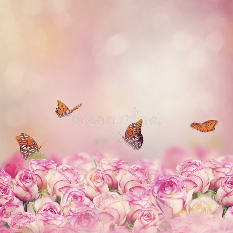 Πεταλούδες Fritillary Κόλπων σε μια φυτεία με τριανταφυλλιές στοκ εικόνες