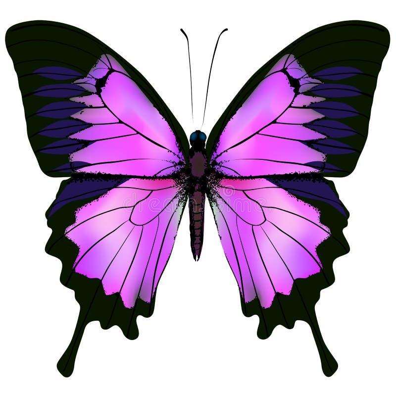 Πεταλούδα Διανυσματική απεικόνιση του όμορφου ρόδινου και πορφυρού χρώματος απεικόνιση αποθεμάτων