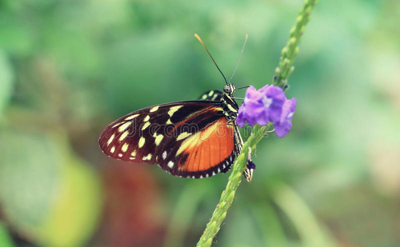 Πεταλούδα κινηματογραφήσεων σε πρώτο πλάνο στοκ εικόνα