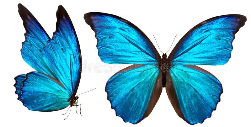 Πεταλούδα που απομονώνεται όμορφη στο λευκό στοκ εικόνες