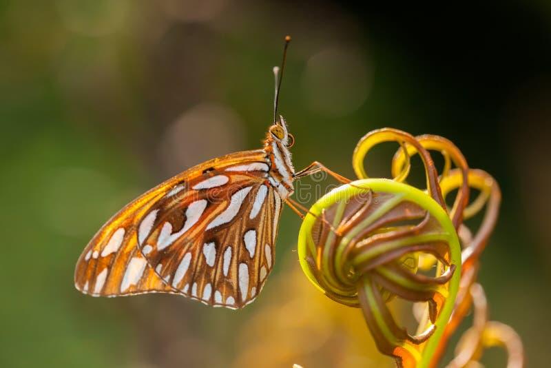 Πεταλούδα στη φτέρη στοκ εικόνες