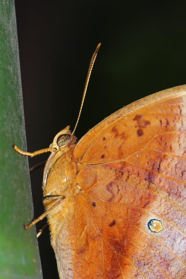 Πεταλούδα στο μπαμπού στοκ εικόνα