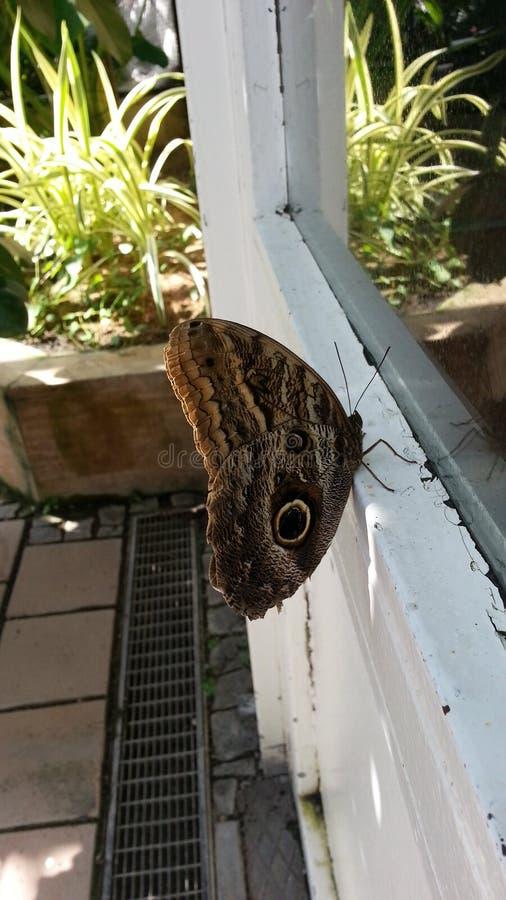 Πεταλούδα στο παράθυρο στοκ εικόνες με δικαίωμα ελεύθερης χρήσης
