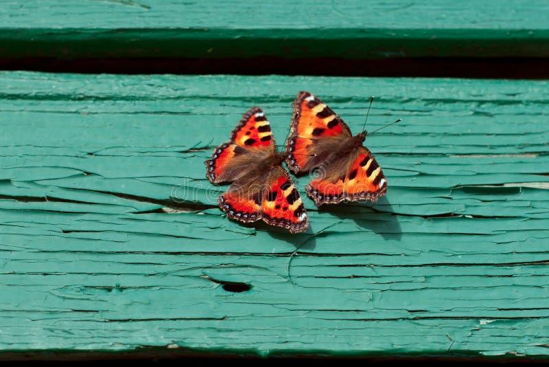 Πεταλούδες στο υπόβαθρο του aquamarine στοκ εικόνα