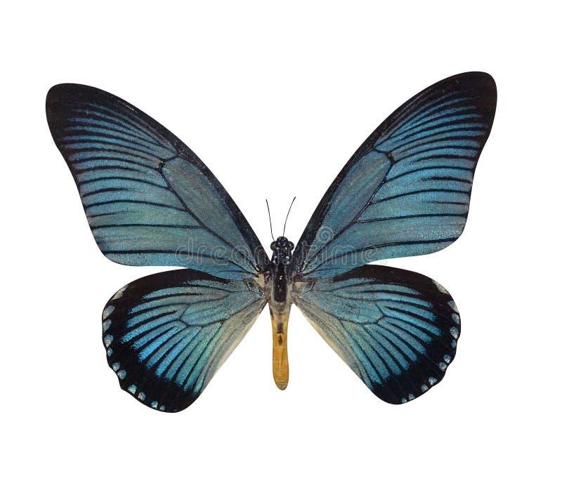 Πεταλούδες απεικόνιση αποθεμάτων