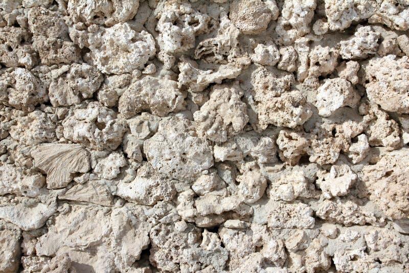 πετρωμένος κοράλλια τοίχ& στοκ φωτογραφίες με δικαίωμα ελεύθερης χρήσης