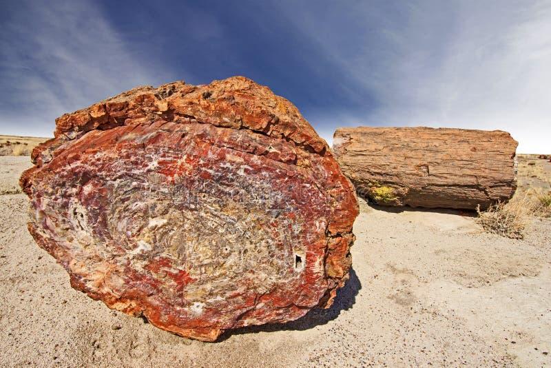 Πετρώνω δέντρο, πετρώνω δασικό εθνικό πάρκο, Αριζόνα, ΗΠΑ. στοκ φωτογραφίες με δικαίωμα ελεύθερης χρήσης