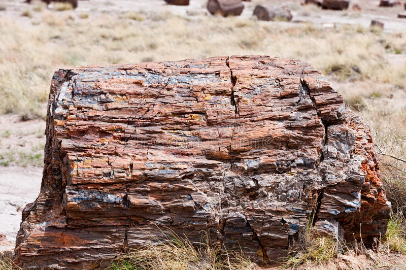 πετρώνω δέντρο κολοβωμάτ&omega στοκ φωτογραφία με δικαίωμα ελεύθερης χρήσης