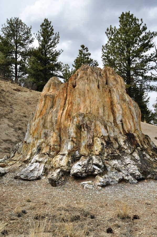 πετρώνω δέντρο κολοβωμάτ&omega στοκ φωτογραφίες