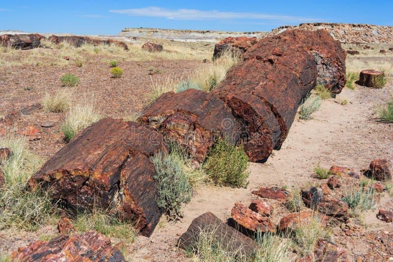 Πετρώνω? κορμοί και ξύλο στο πετρώνω δασικό εθνικό πάρκο, Αριζόνα, ΗΠΑ στοκ εικόνες