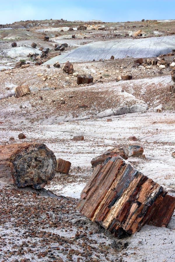 Πετρώνω? ξύλινα κούτσουρα, πετρώνω δασικό εθνικό πάρκο, Αριζόνα, ΗΠΑ στοκ φωτογραφία με δικαίωμα ελεύθερης χρήσης
