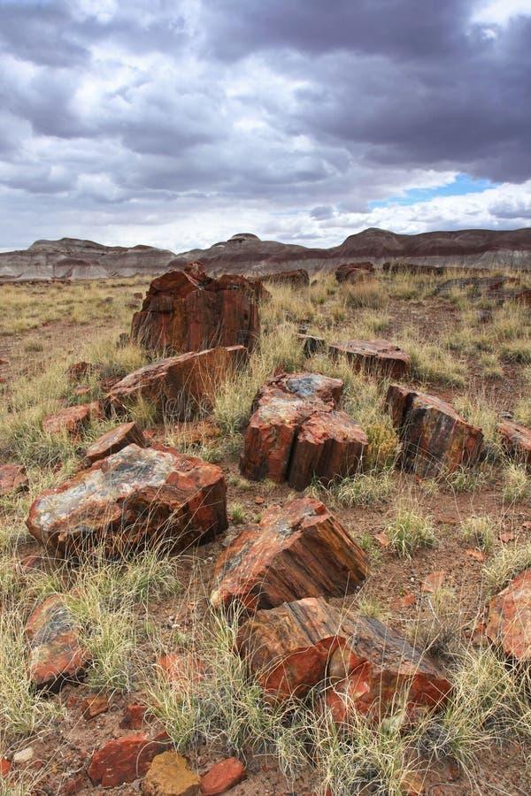 Πετρώνω? ξύλινοι κορμοί στο πετρώνω δασικό εθνικό πάρκο, Αριζόνα στοκ φωτογραφία με δικαίωμα ελεύθερης χρήσης