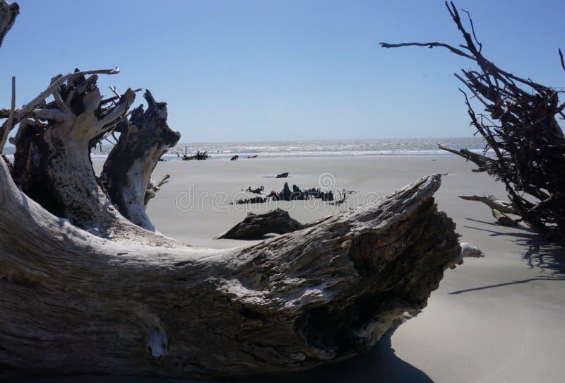 Πετρώνω ξύλο στην παραλία Boneyard στη νότια Καρολίνα νησιών καπάρων στοκ φωτογραφία με δικαίωμα ελεύθερης χρήσης