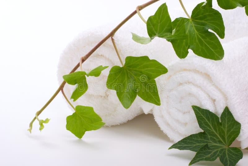 πετσέτες κισσών στοκ εικόνες