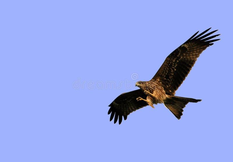 πετώντας άγρια περιοχές α&eps στοκ φωτογραφία με δικαίωμα ελεύθερης χρήσης
