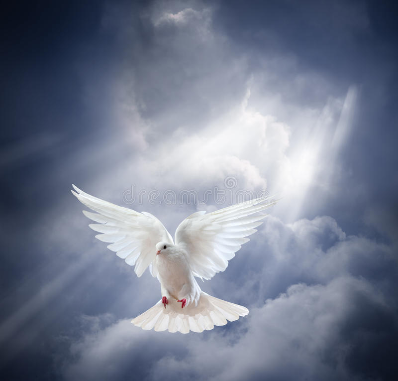 Πετώντας άσπρο περιστέρι στο υπόβαθρο μπλε ουρανού στοκ εικόνες με δικαίωμα ελεύθερης χρήσης