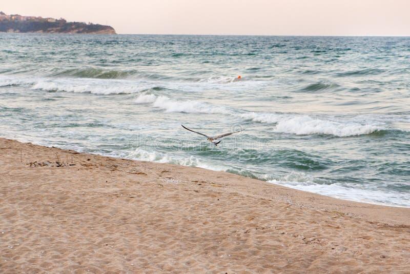 Πετώντας γλάρος σε ένα υπόβαθρο ηλιοβασιλέματος στην παραλία θάλασσας στοκ φωτογραφία με δικαίωμα ελεύθερης χρήσης