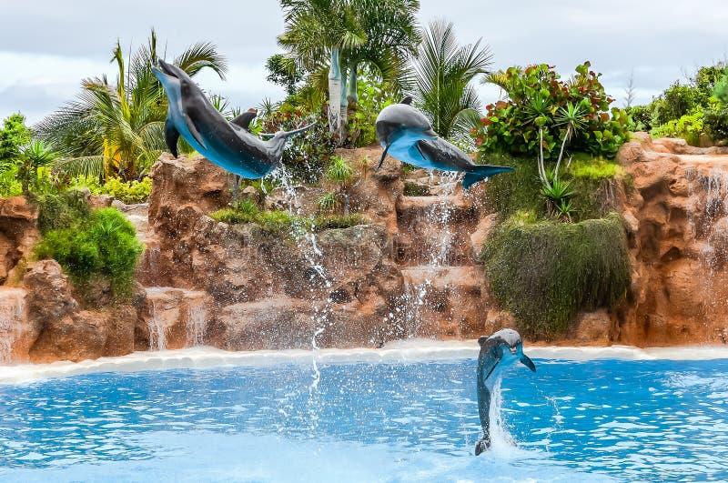 Πετώντας δελφίνια στοκ φωτογραφία με δικαίωμα ελεύθερης χρήσης