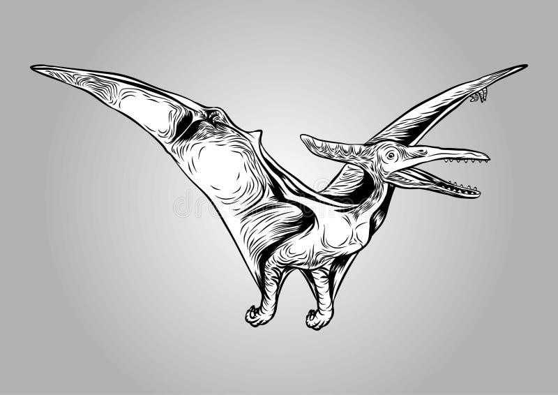 Πετώντας διανυσματική απεικόνιση δεινοσαύρων Pterodactylus προϊστορική ελεύθερη απεικόνιση δικαιώματος