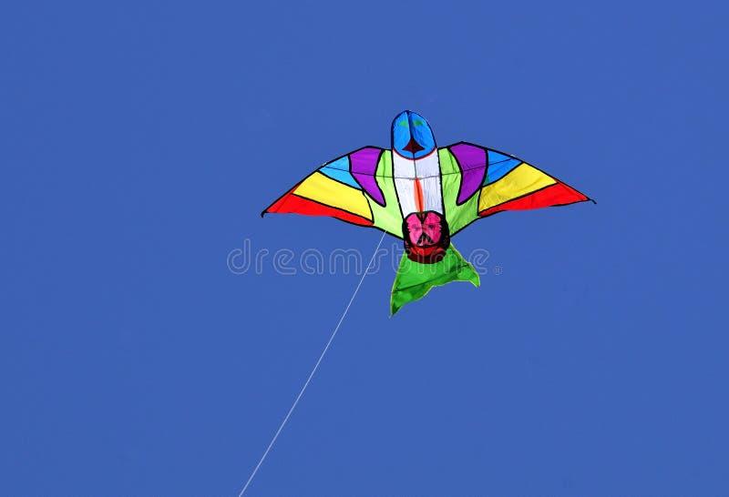 πετώντας ικτίνος στοκ εικόνες