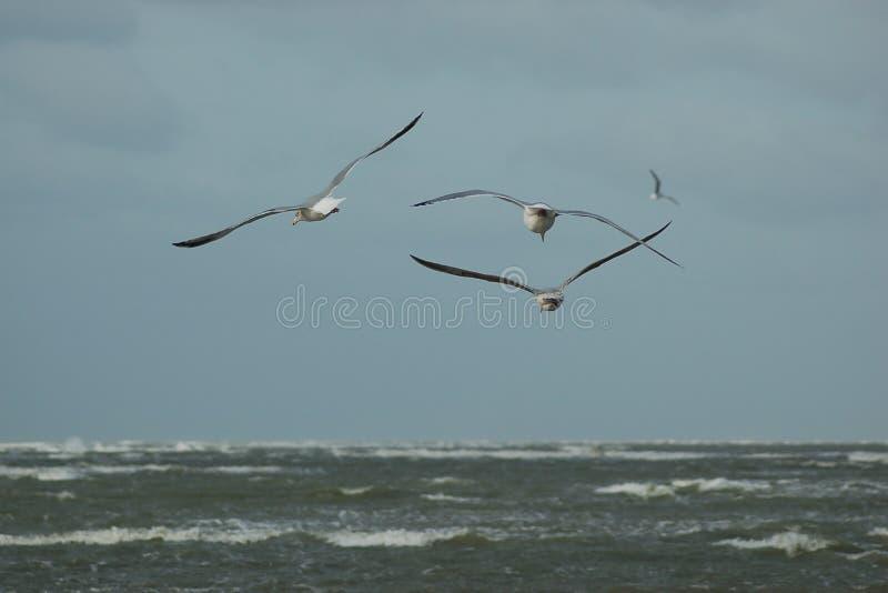 Πετώντας πουλιά στοκ εικόνες