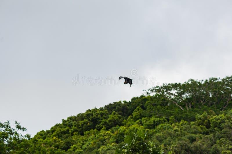 Πετώντας ρόπαλο στις Σεϋχέλλες, νησί Mahe στοκ εικόνες