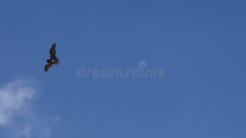Πετώντας ρόπαλο στοκ φωτογραφίες με δικαίωμα ελεύθερης χρήσης