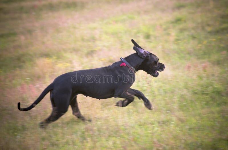Πετώντας σκυλί στο θερινό λιβάδι στοκ φωτογραφία με δικαίωμα ελεύθερης χρήσης