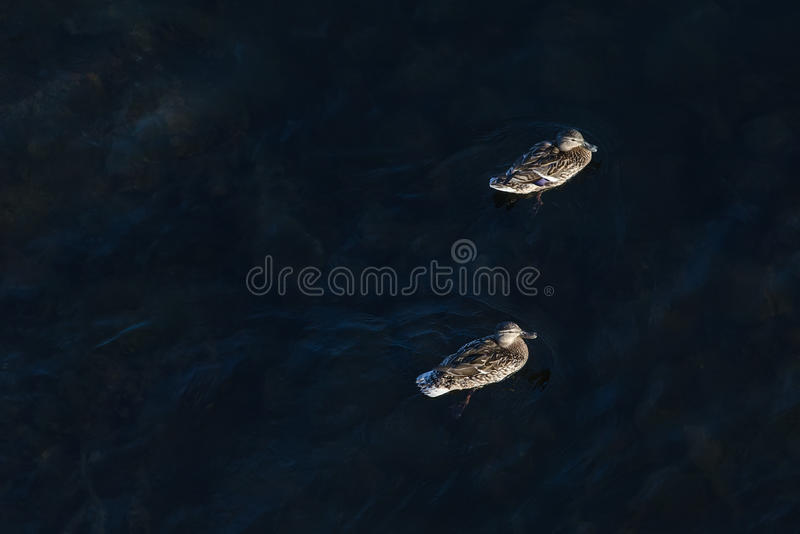 Πετώντας στα ύψη ζευγάρι στοκ φωτογραφίες