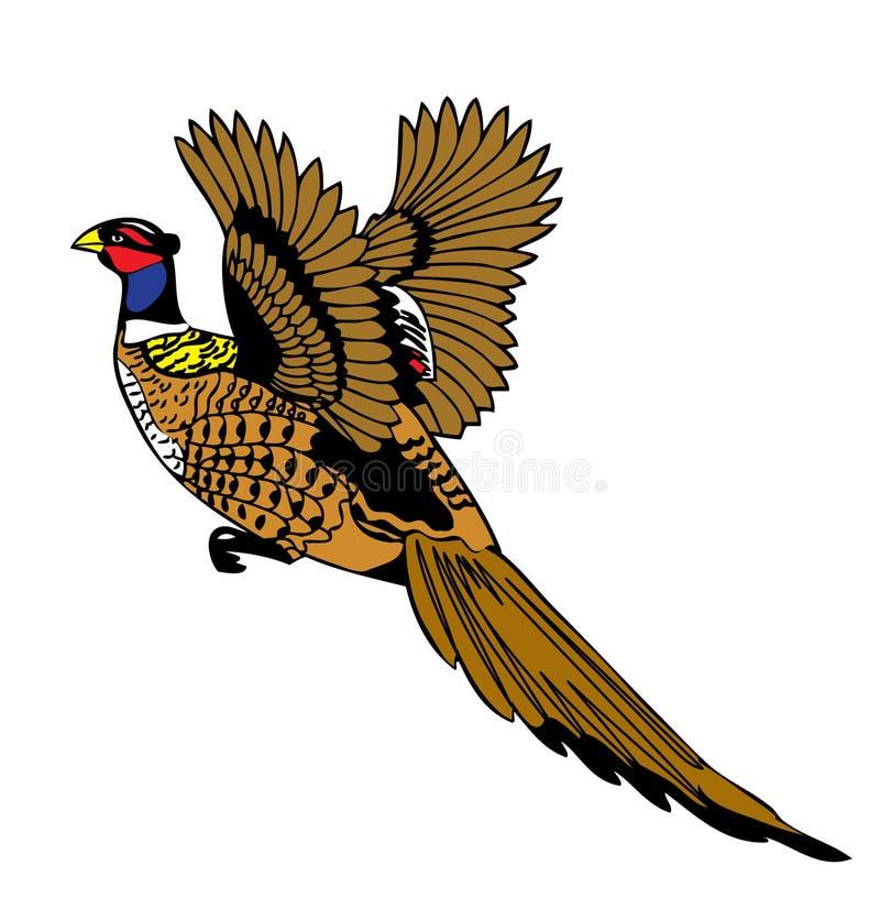 πετώντας φασιανός πουλιώ&nu ελεύθερη απεικόνιση δικαιώματος