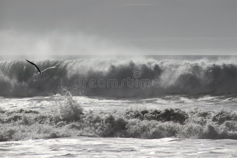 Πετώντας seagull μπροστά από τα κύματα στοκ φωτογραφία